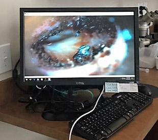 West End Veterinary Endoscopy